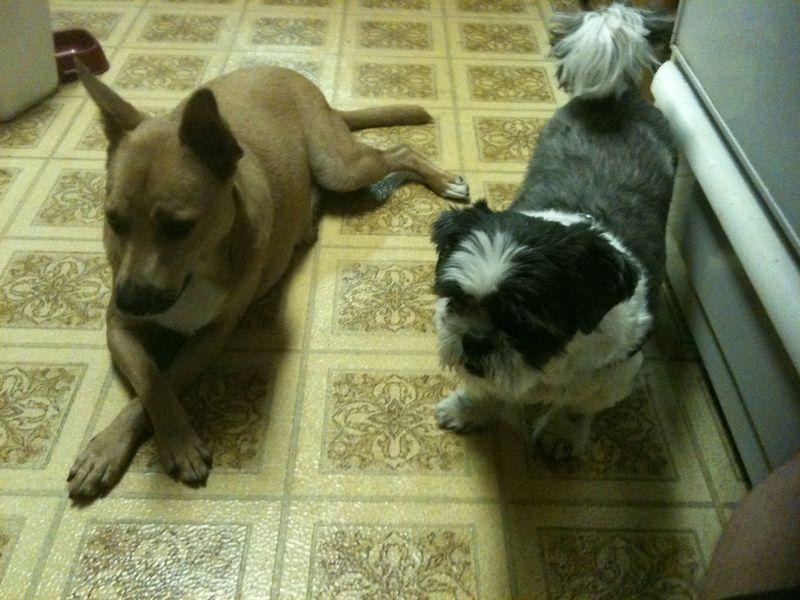 Daisy & Oscar